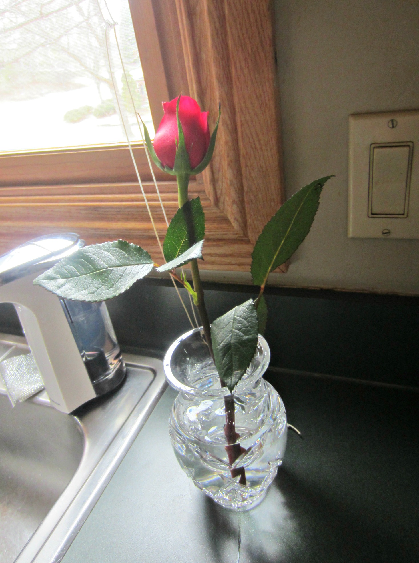 rose in nana's crystal vase
