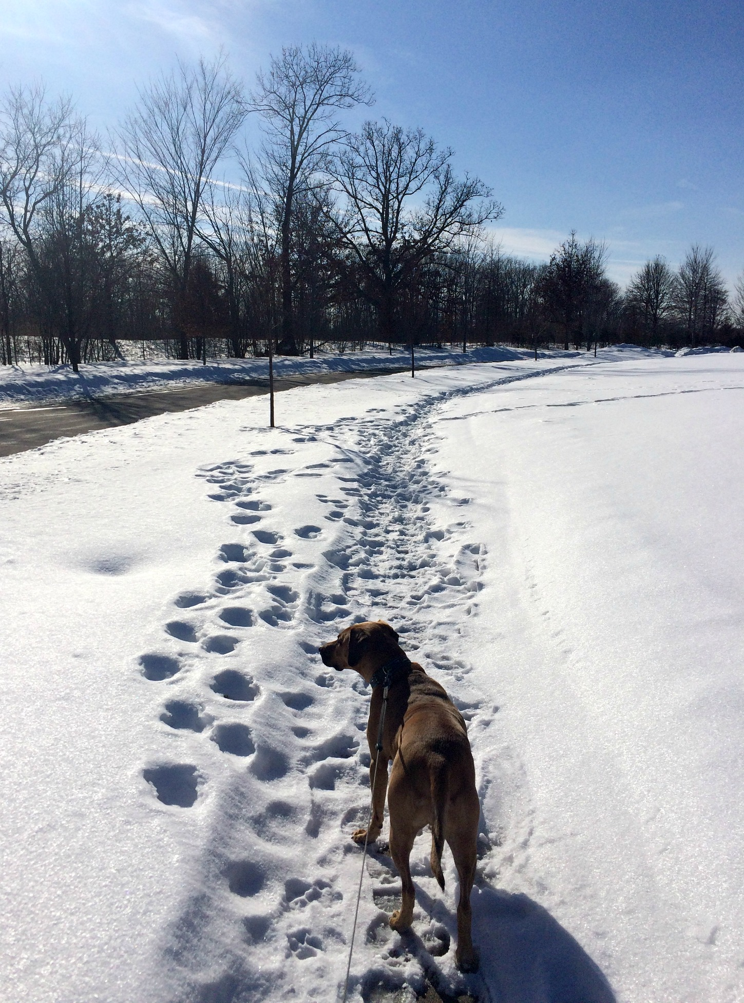 running in the snow with roadie