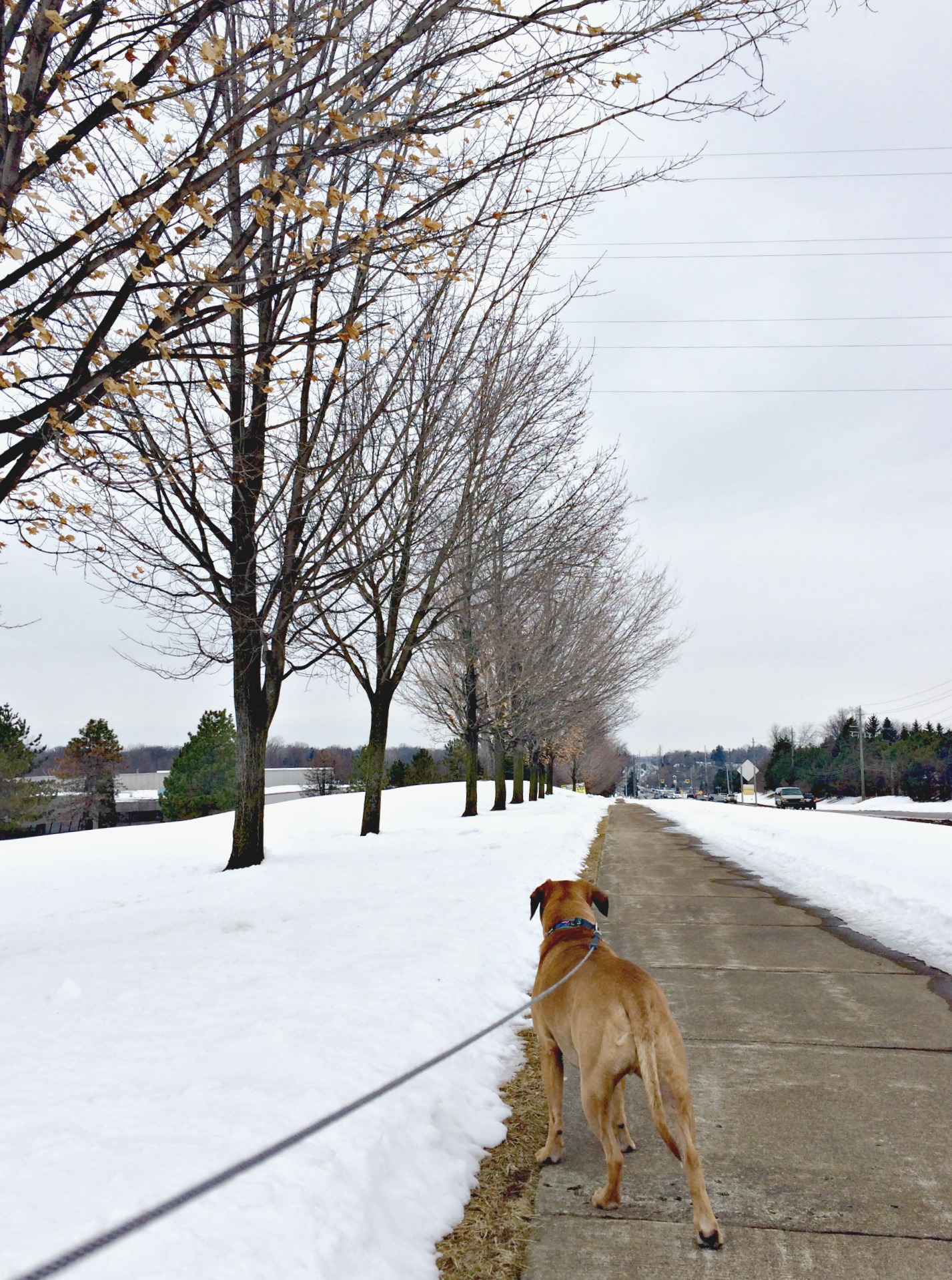 running with roadie in the winter