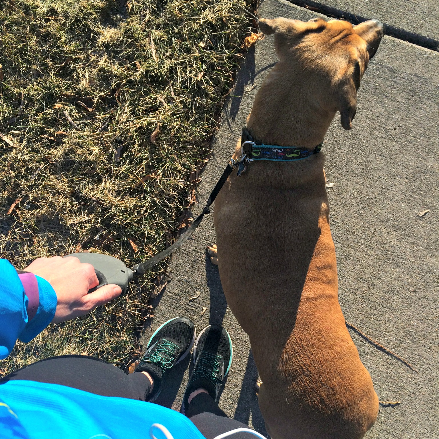 running with roadie nice weather