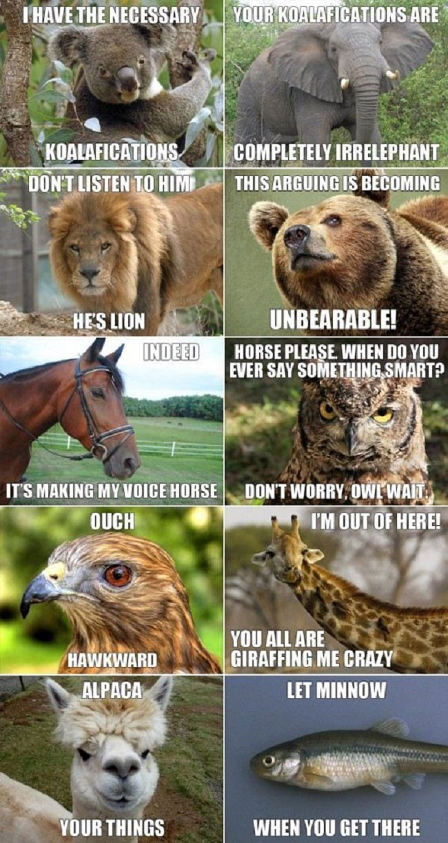 funny animal pun