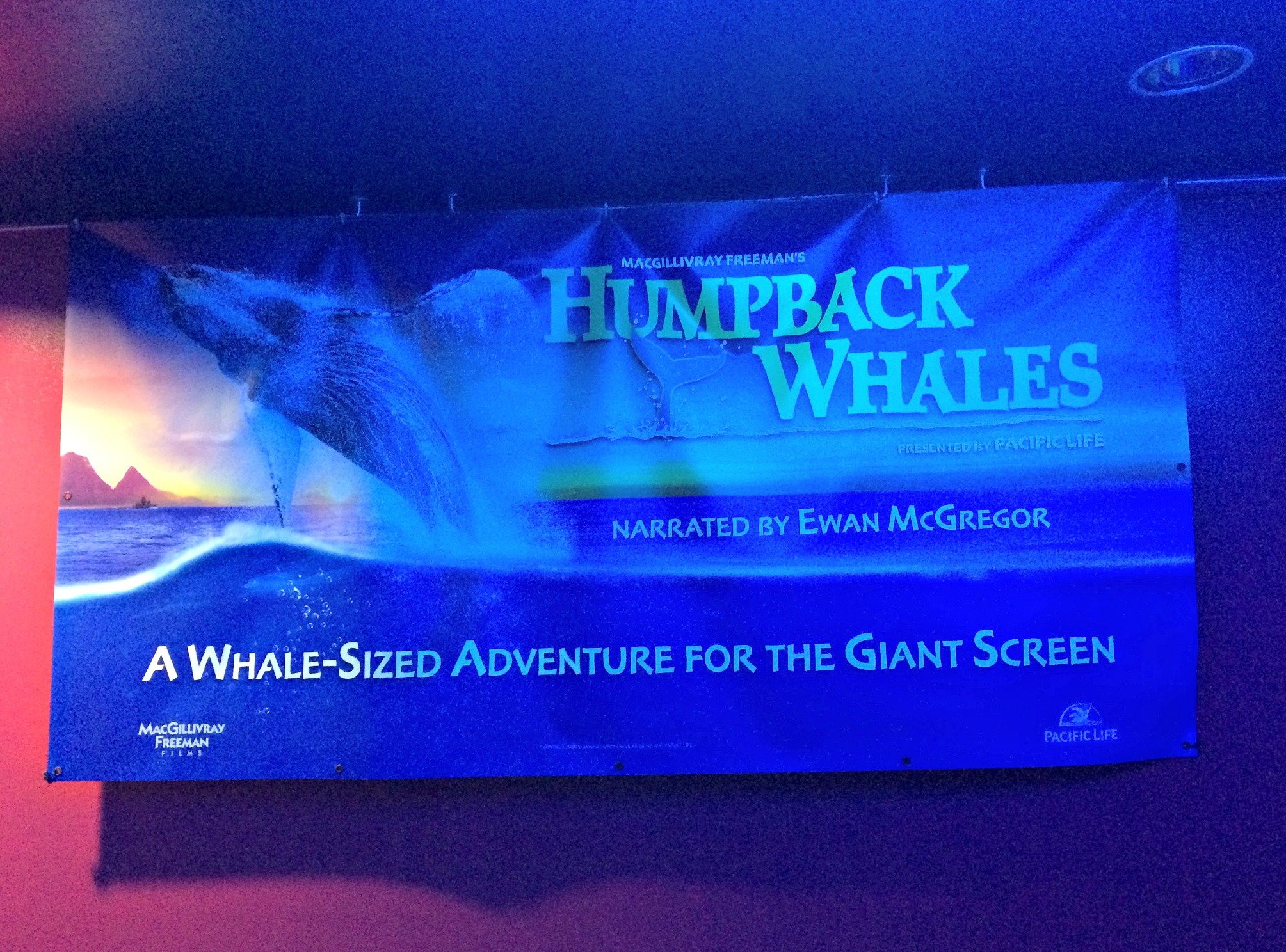 humpback whales pacific life at imax detroit science center