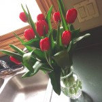 red tulips in crystal vase