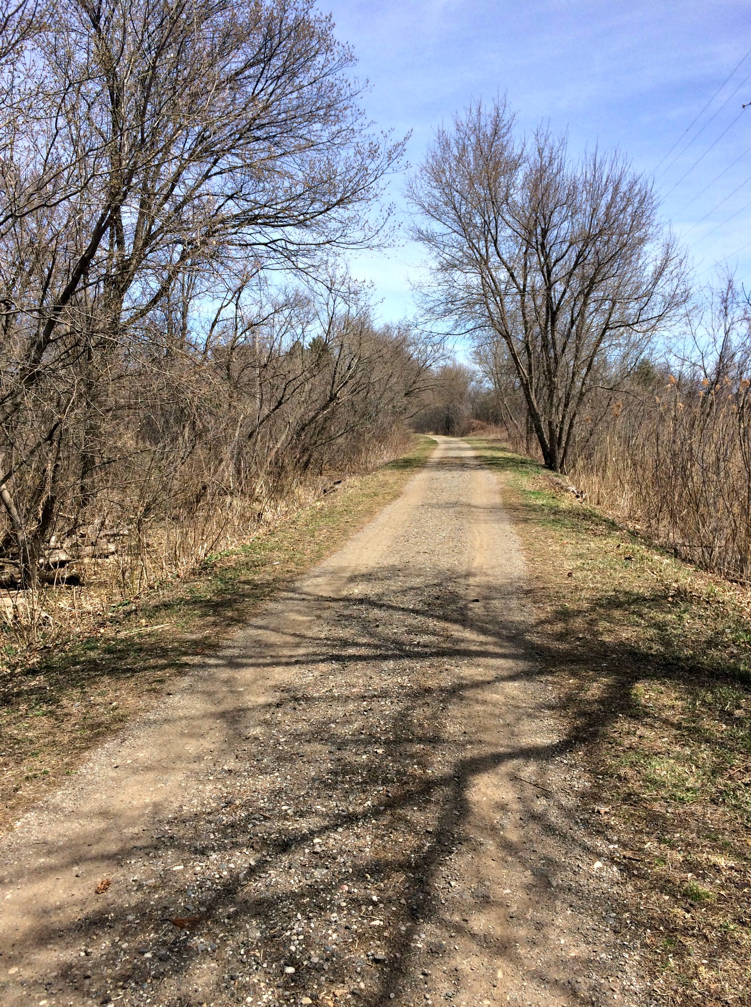 trail running in spring