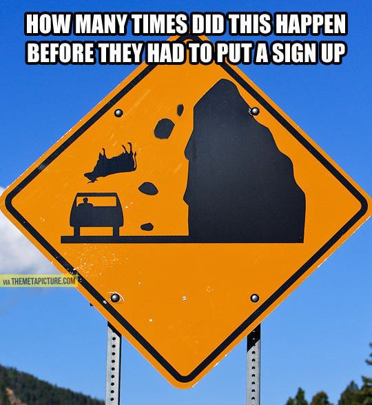 watch out for cows