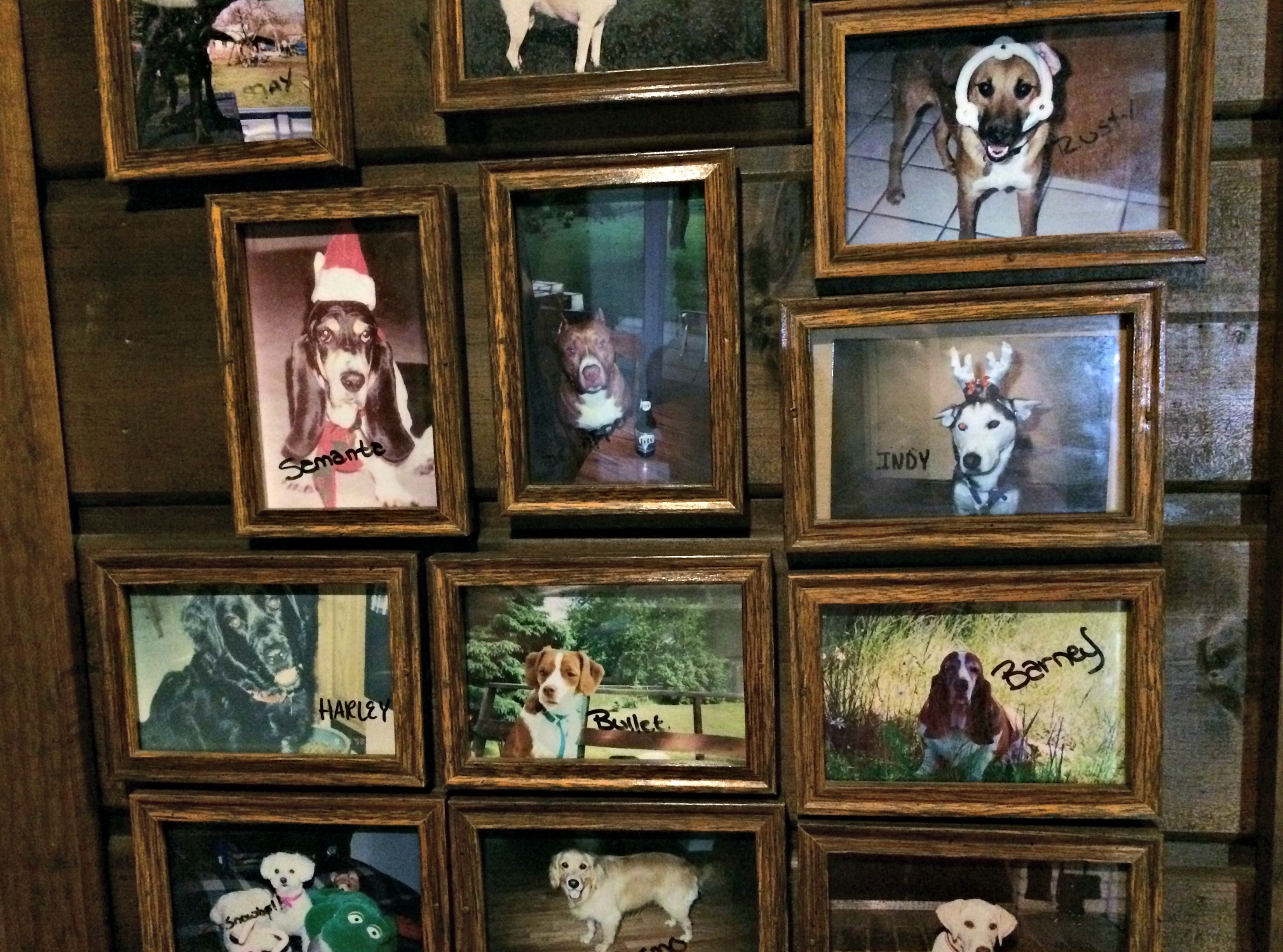 Camp Ticonderoga dog wall