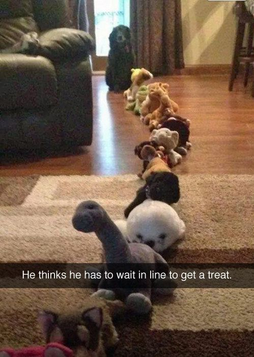 funny dog snapchat line of animals