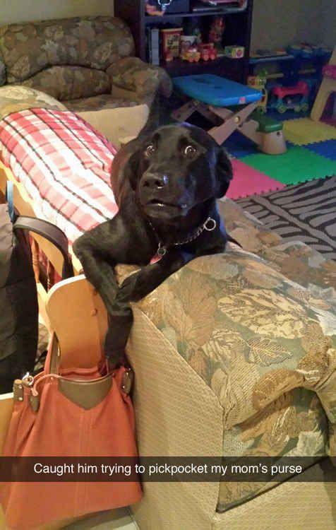 funny dog snapchat