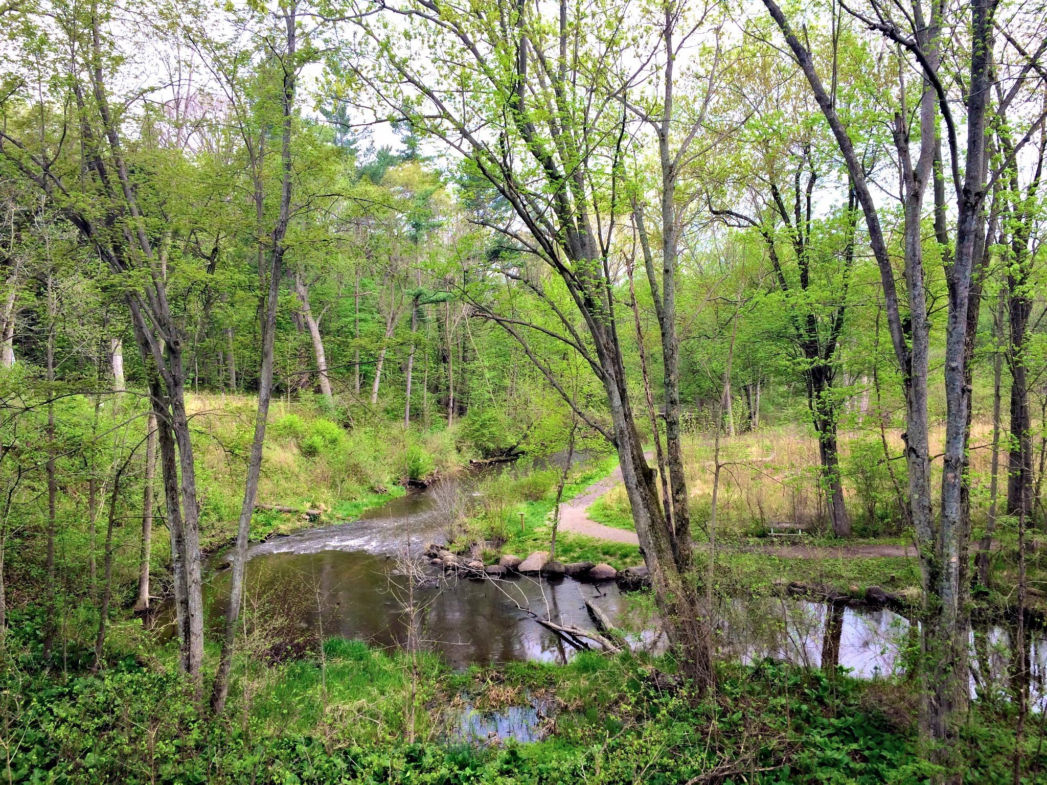 stoney creek metropark overlook