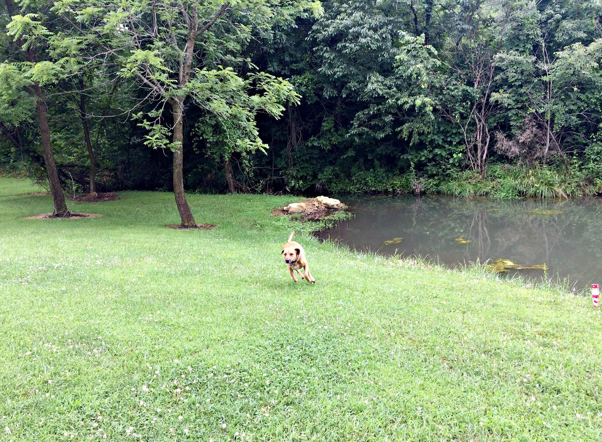 Roadie running by the lake