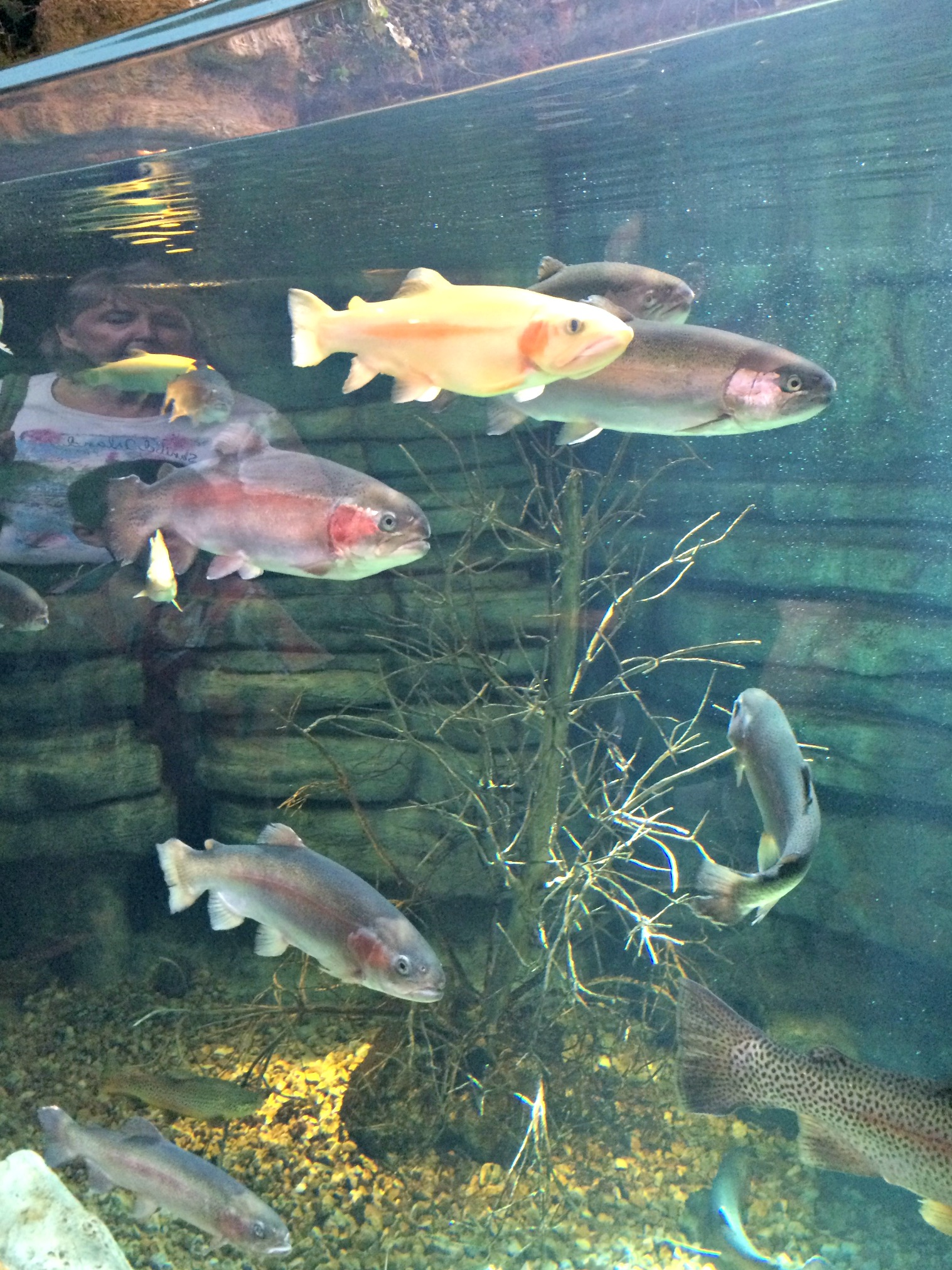 fish at bass pro shops