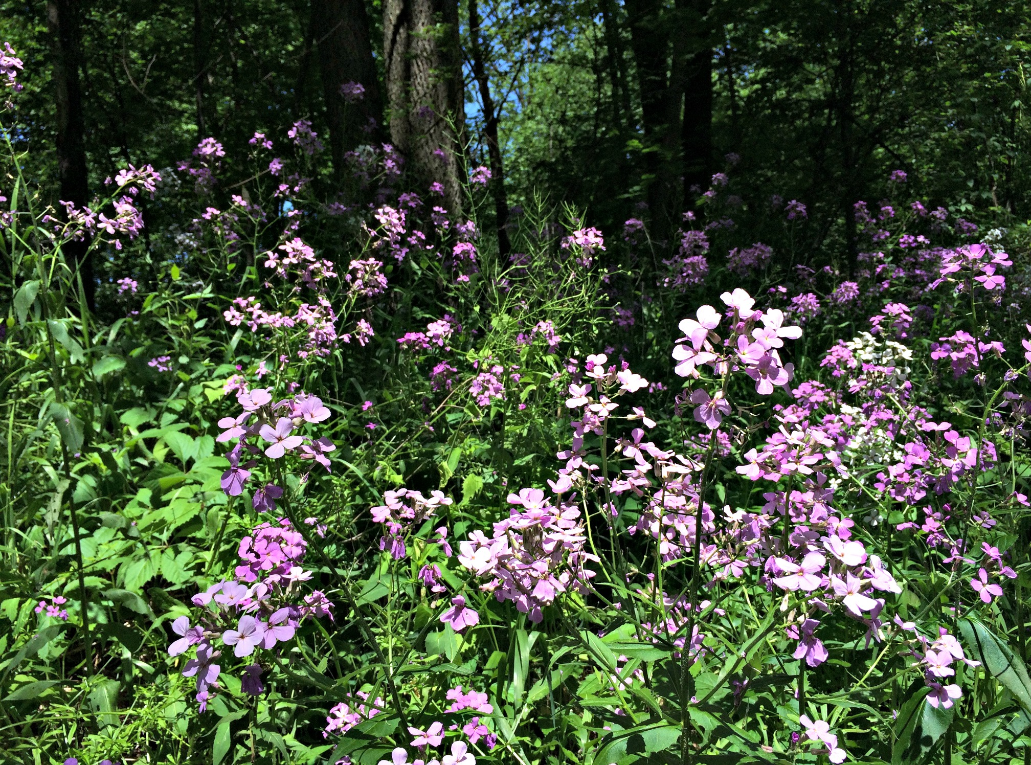 purple flowers on running trails