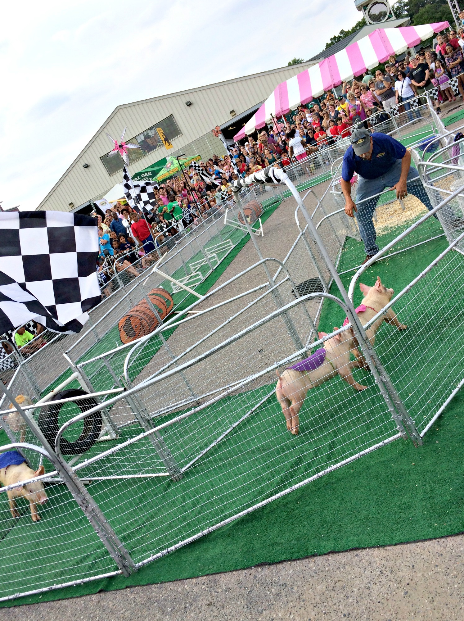 Royal Oak Ribfest Pig Races