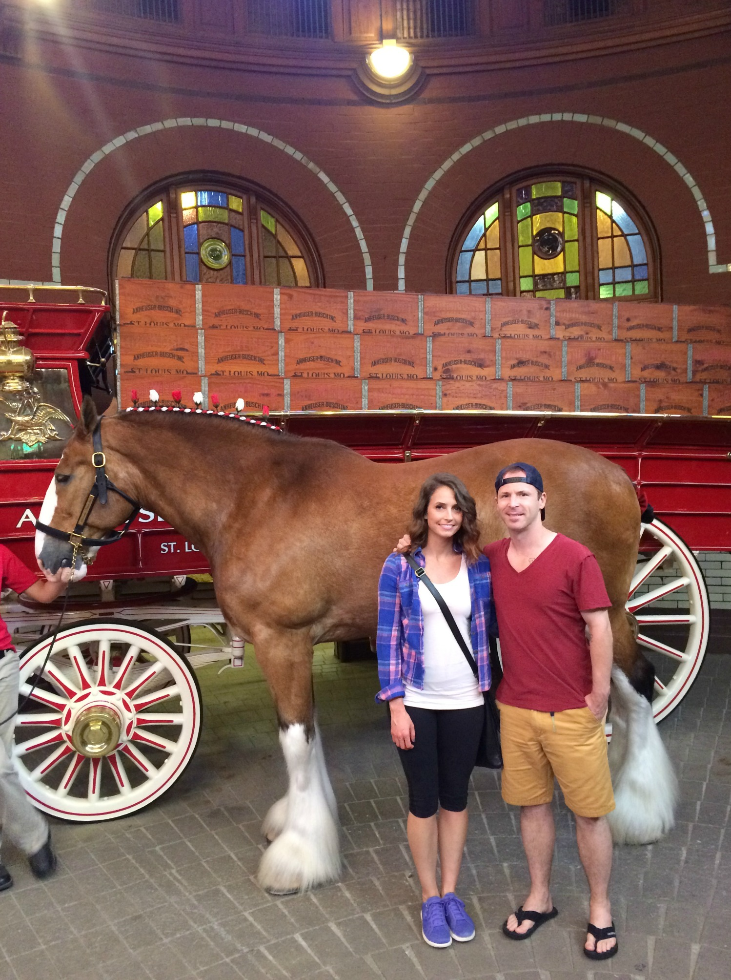 anheiser busch clydesdales