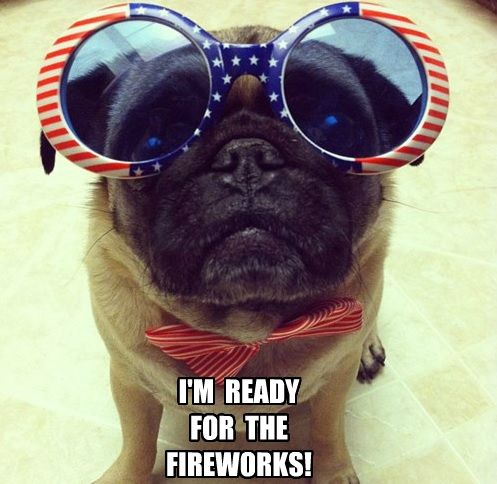 funny pug for the 4th of july