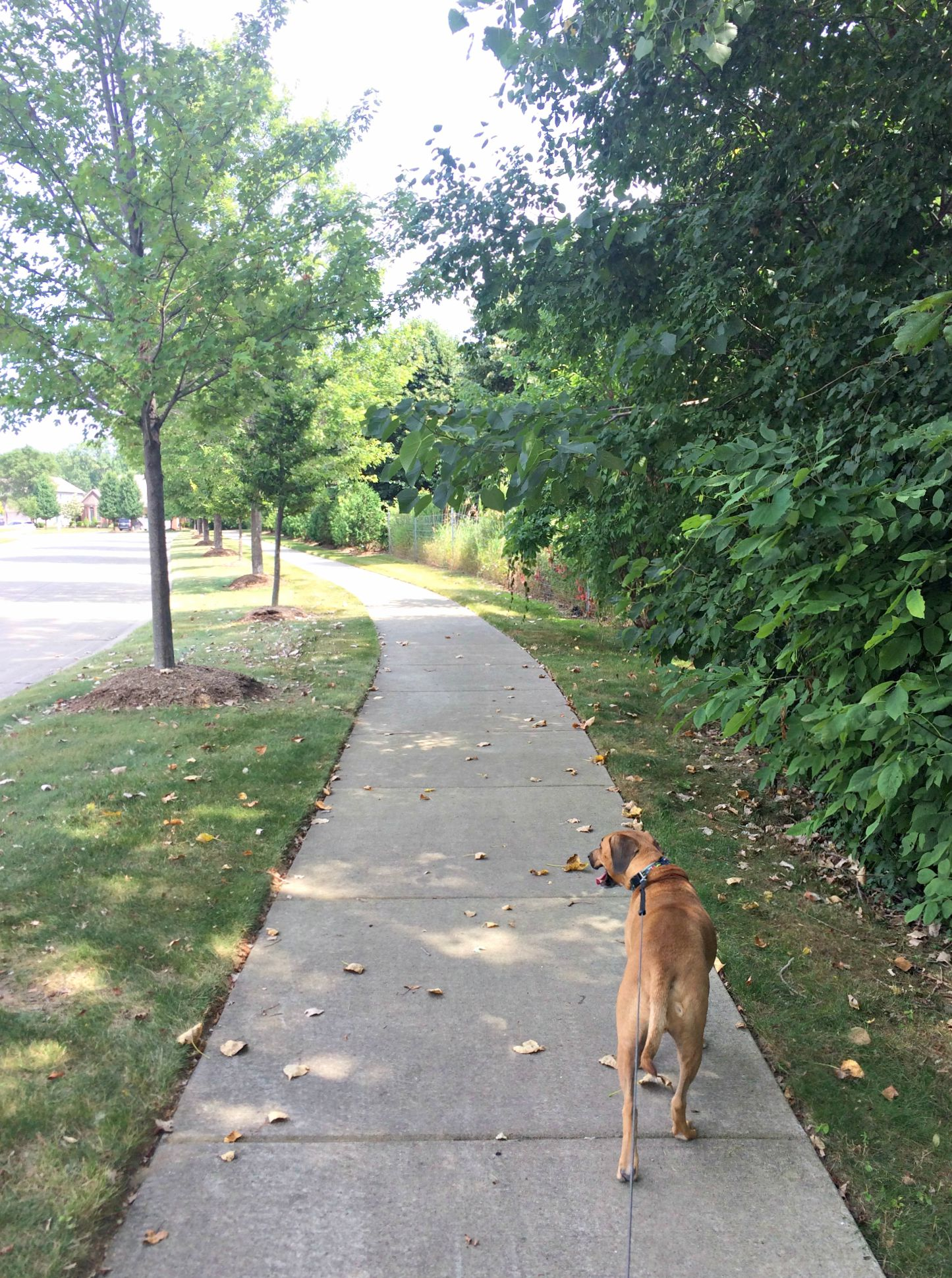 running with roadie in the shade