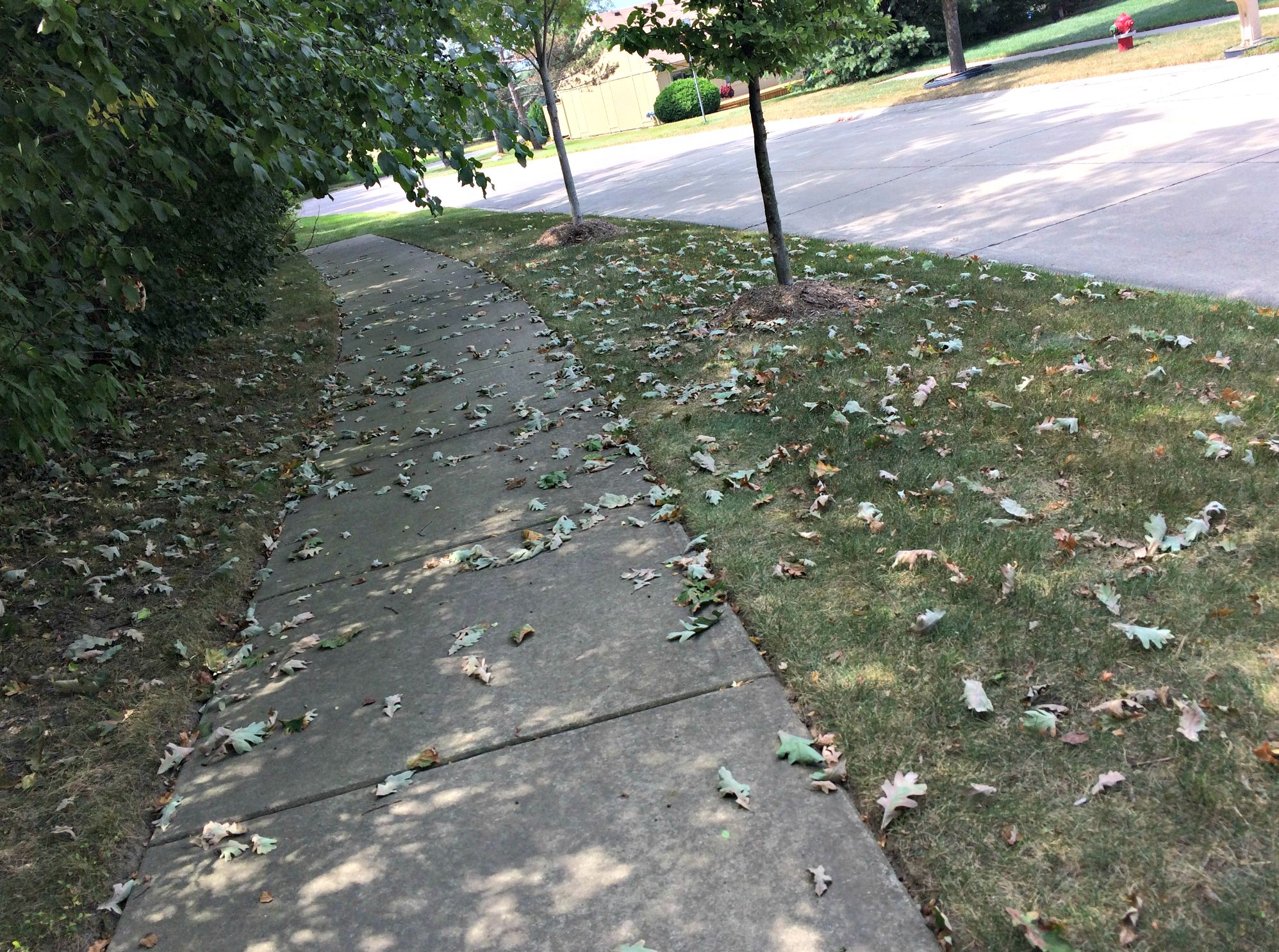 leaves falling on sidewalk