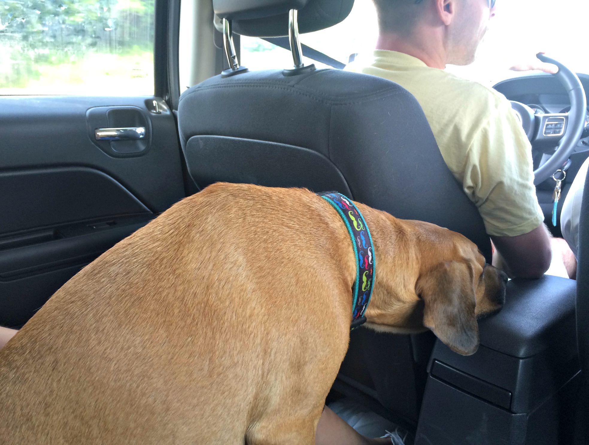 roadie being funny in the car