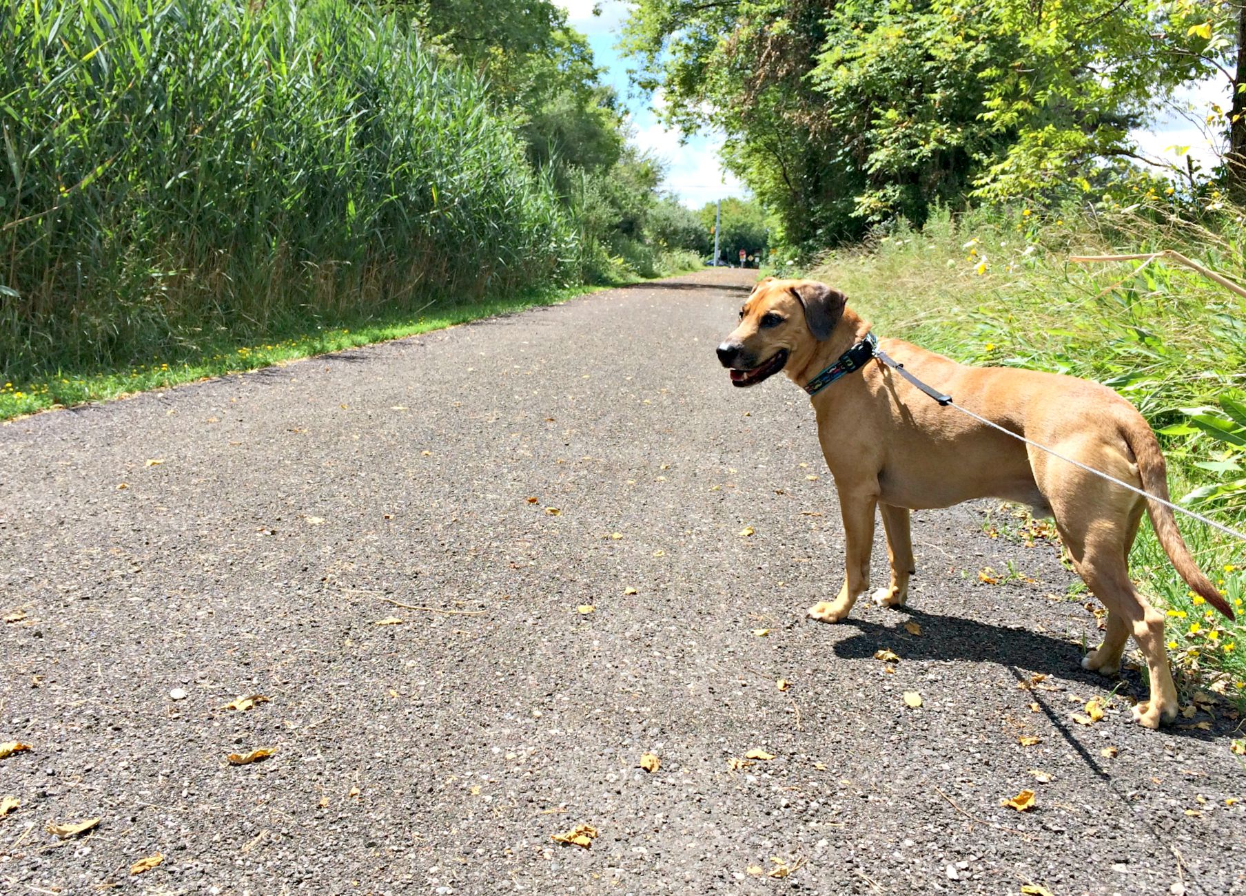 running with roadie on trails