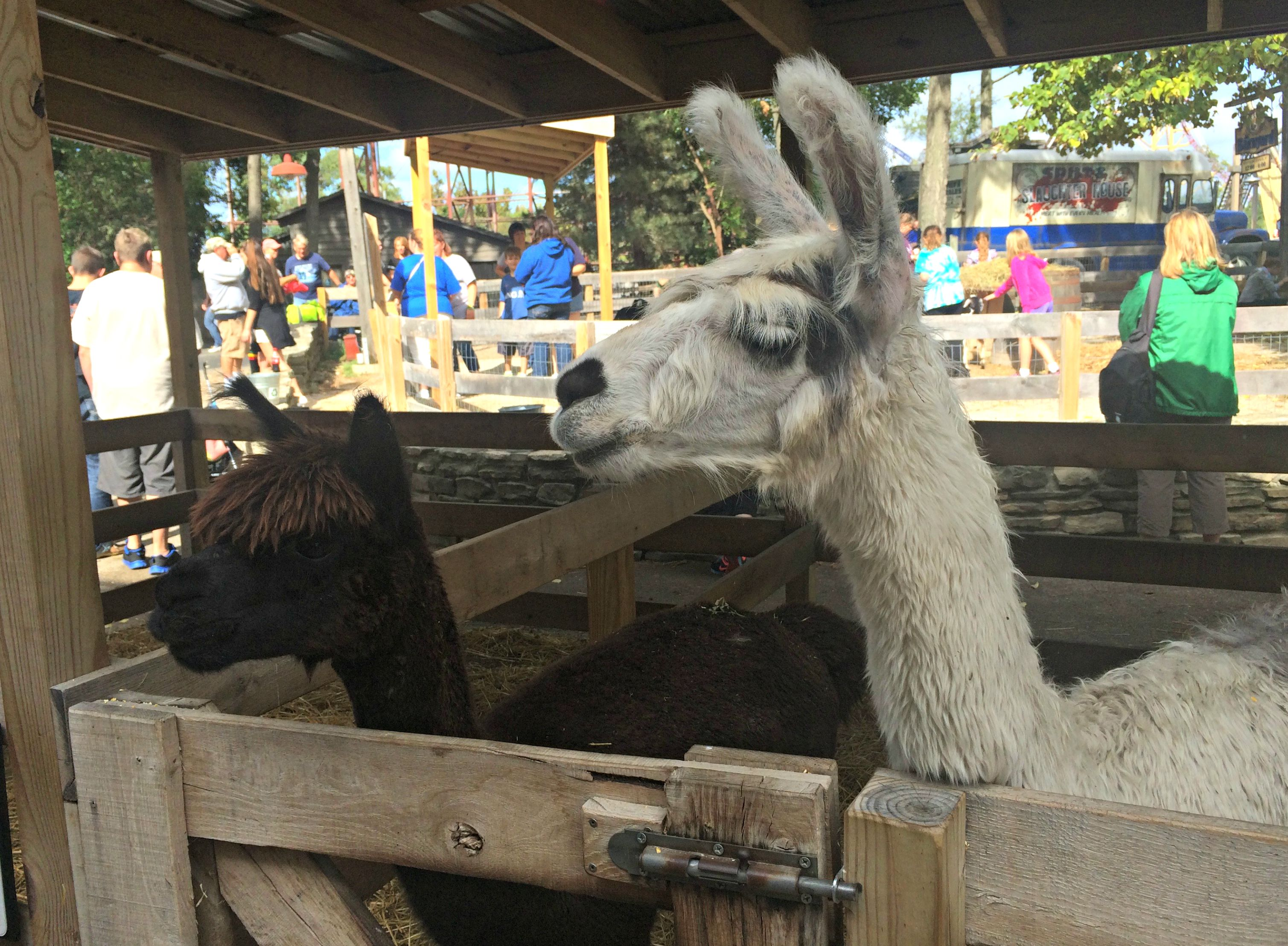 cedar point barnyard llamas