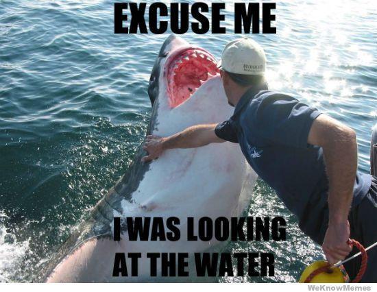 shark funny