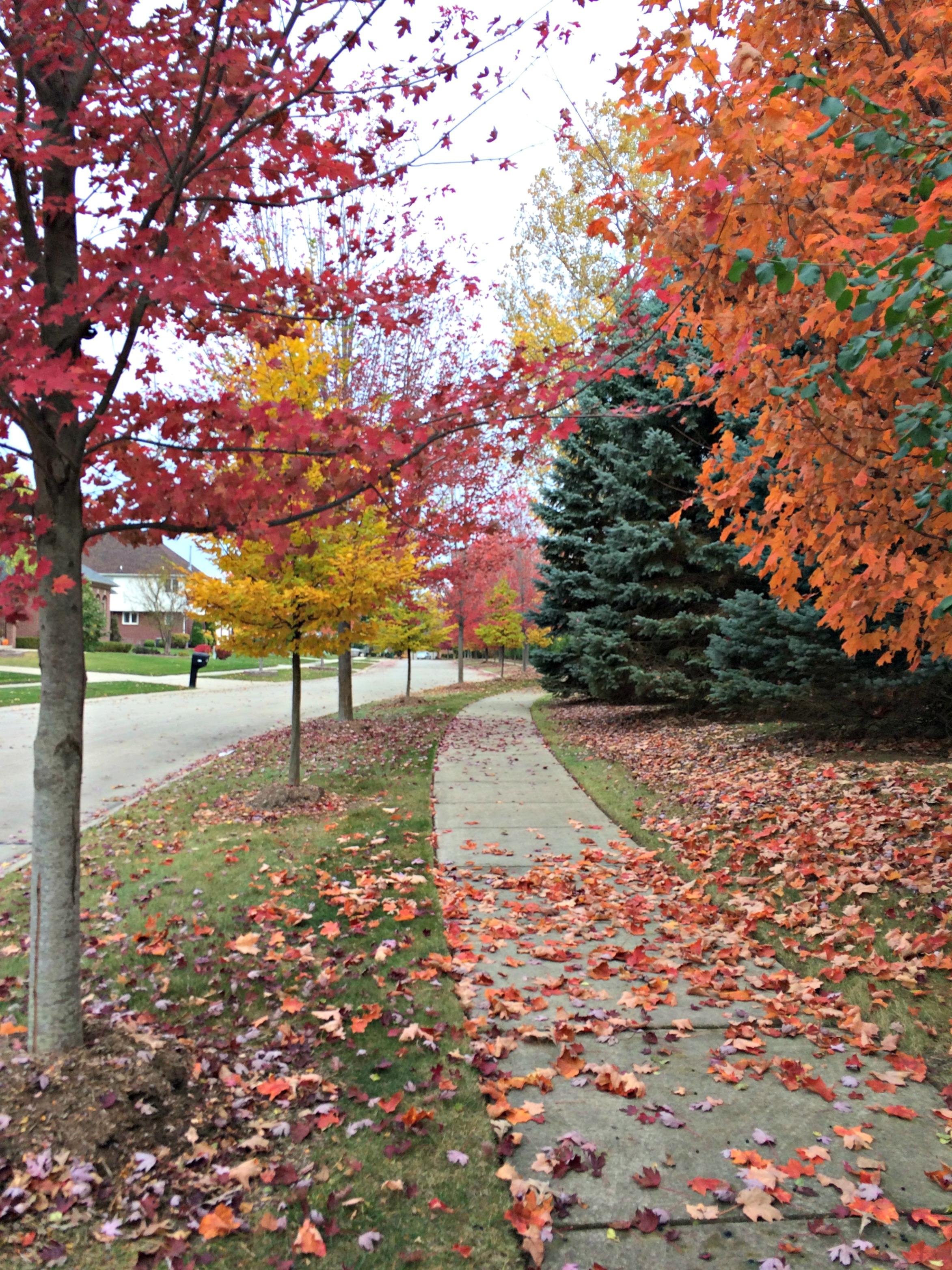 fall foliage in michigan