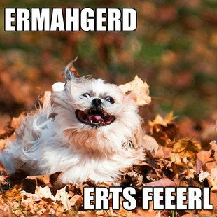 funny fall dog