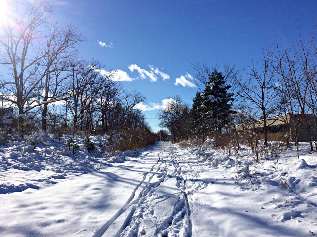 snow on the trails