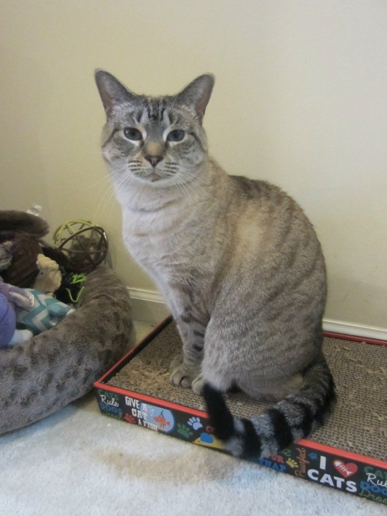 aspen on cat scratch pad