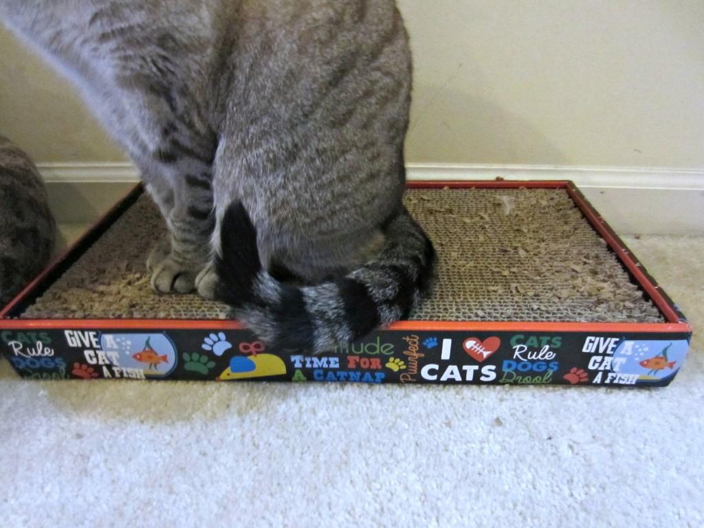 sarah ellis cat behaviour