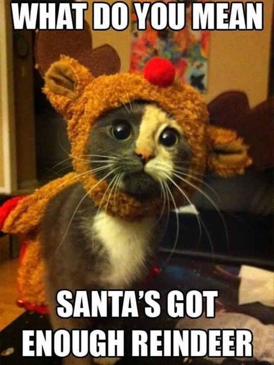 funny cat reindeer meme