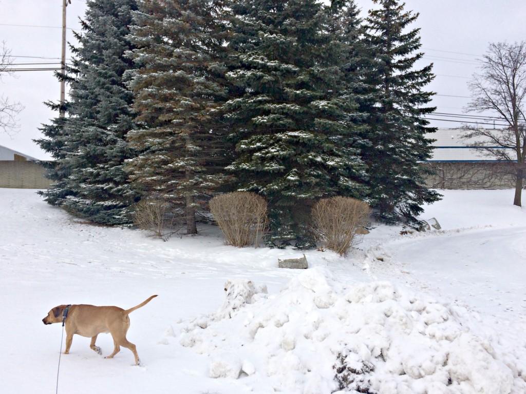 walking roadie in the snow