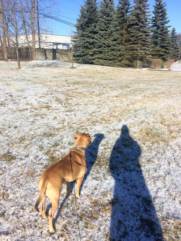 walking roadie in the winter