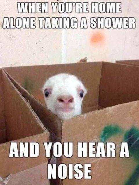 shower funny