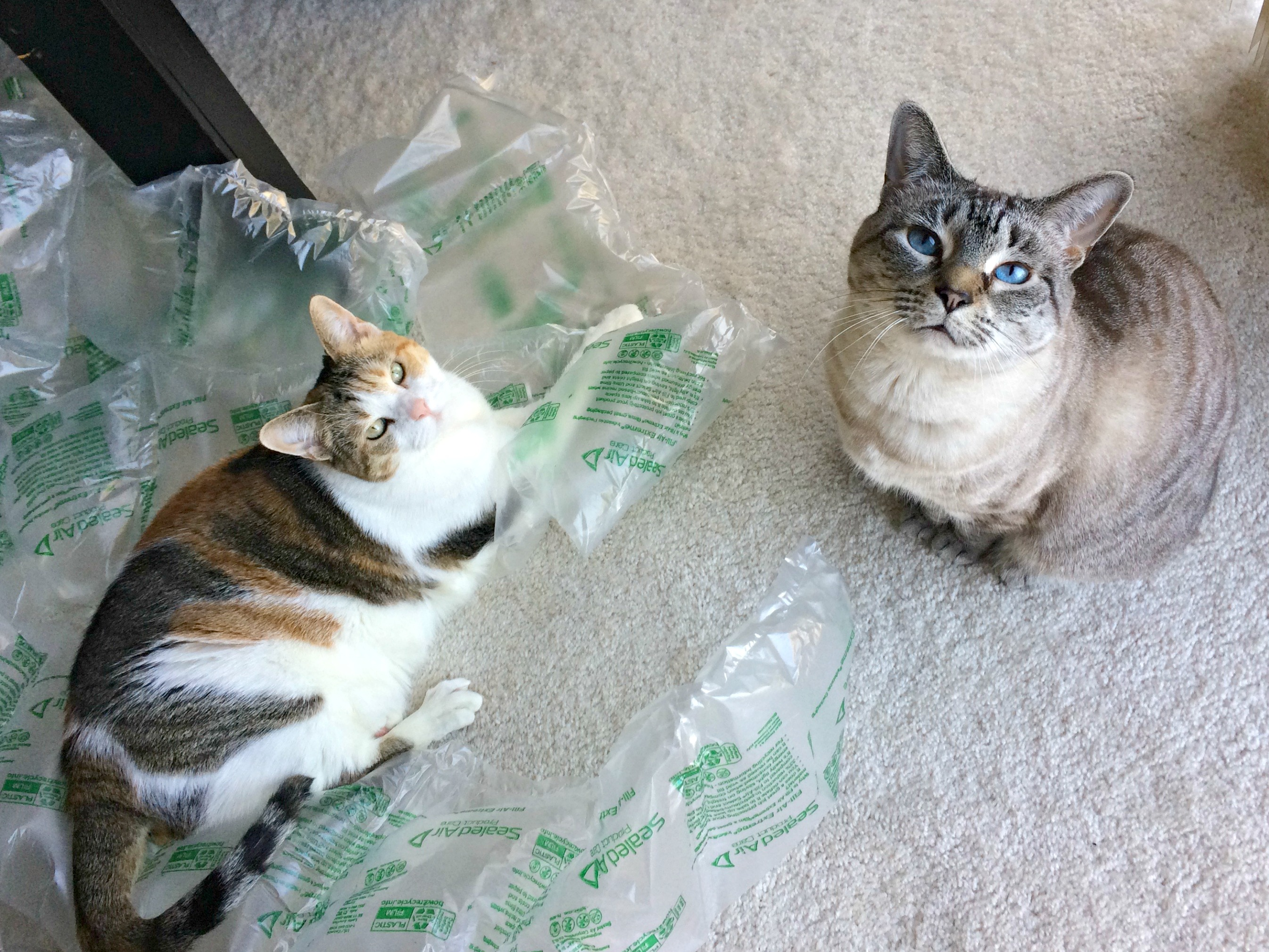Cali and Aspen on bubble wrap
