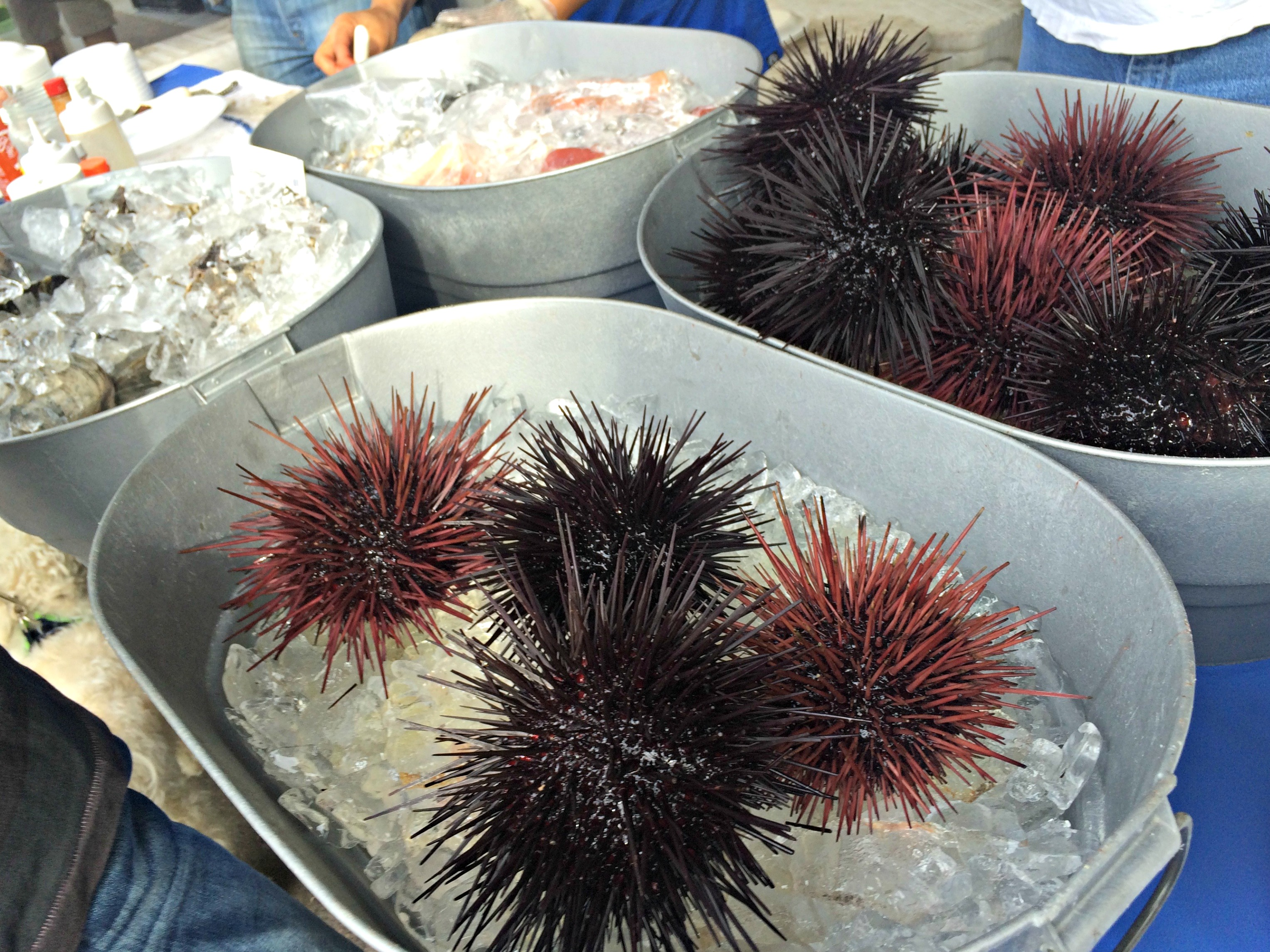 Farmer's Market Sea Eurchins