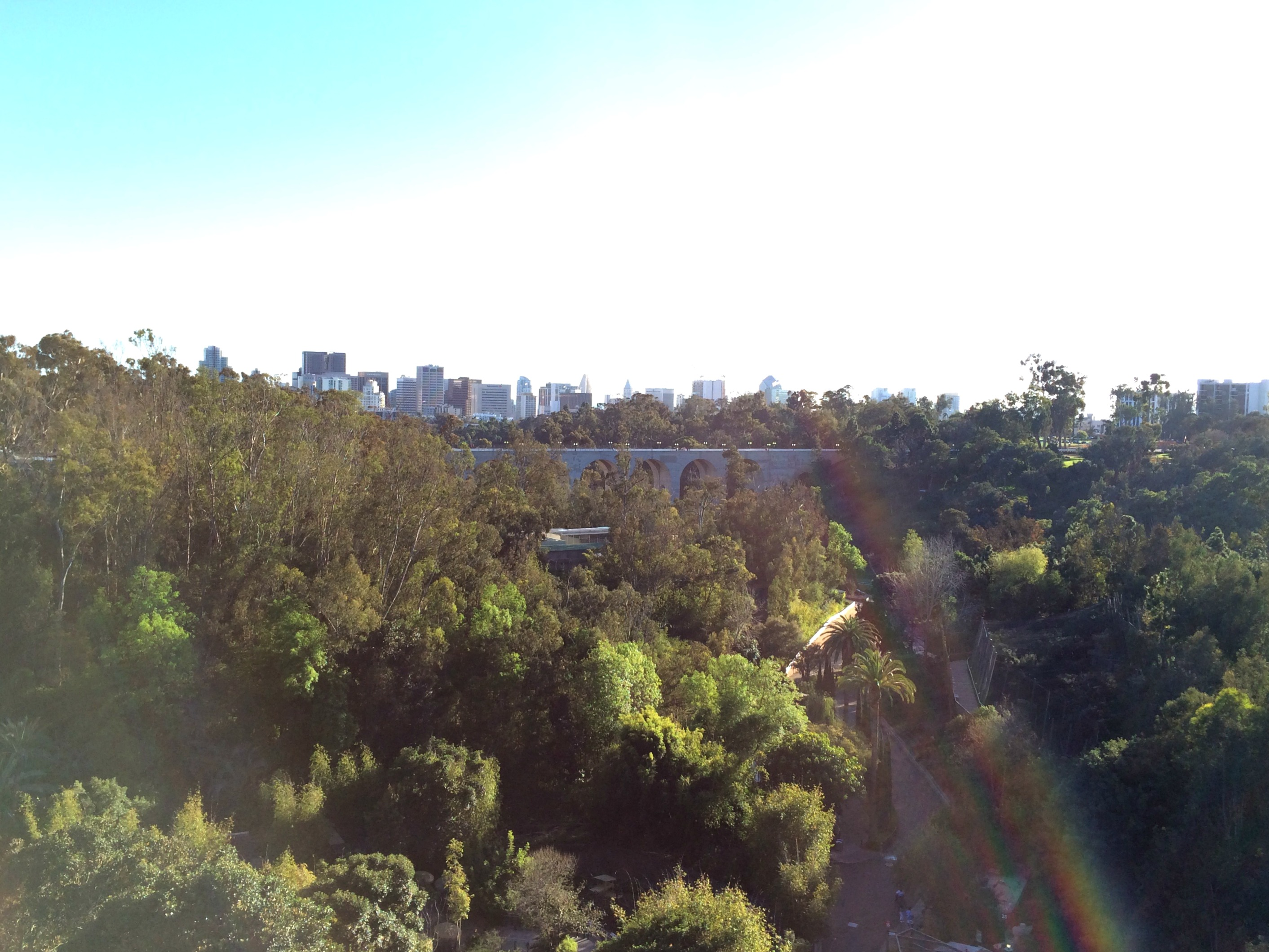 san diego skyline from zoo