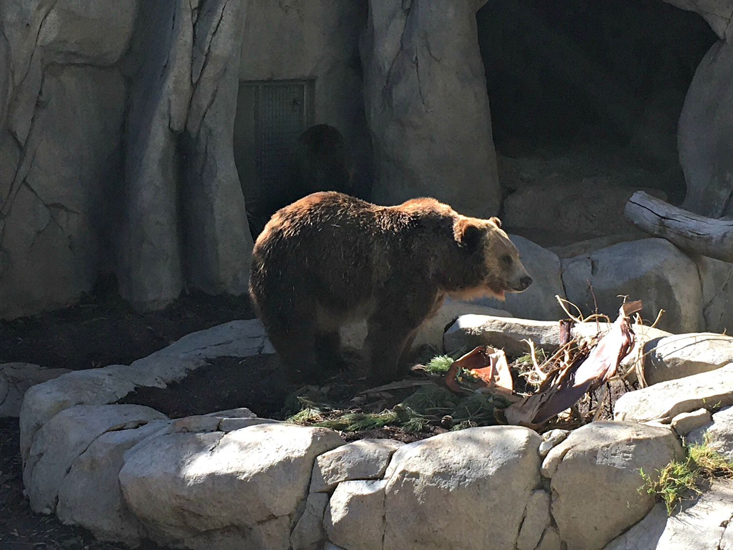 san diego zoo grizzly bear
