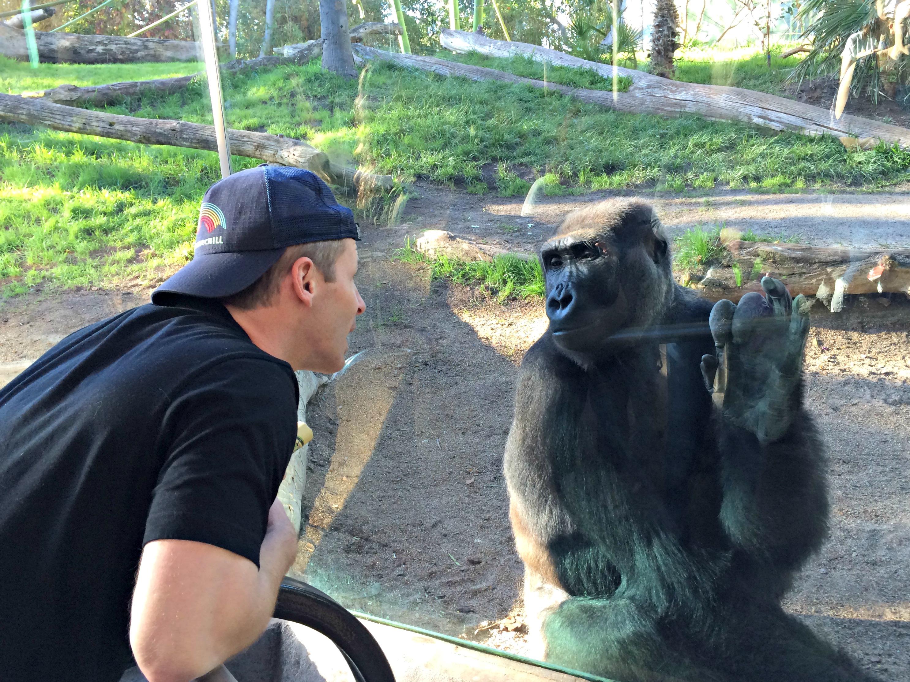 san diego zoo scott and gorilla