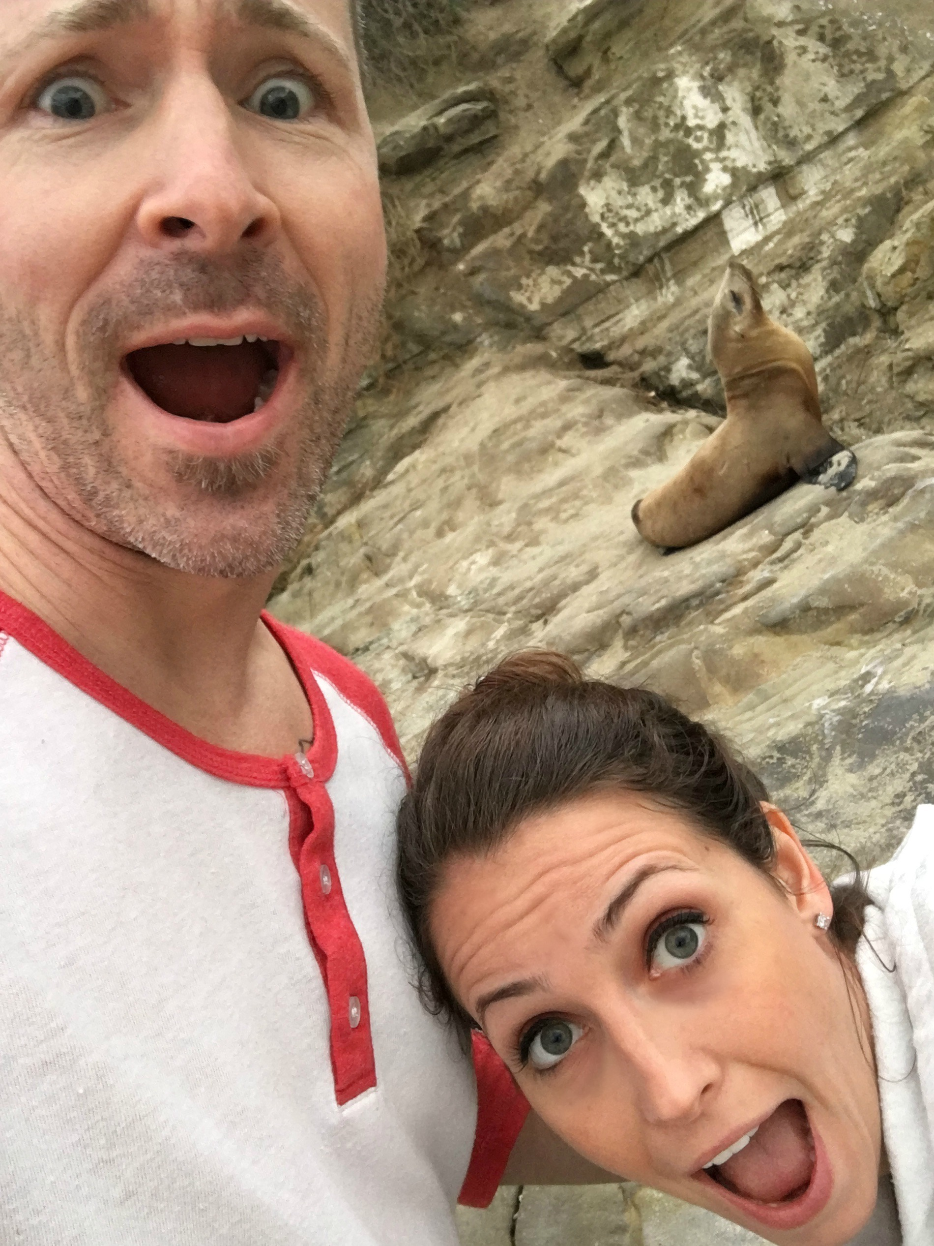 sea lion selfie