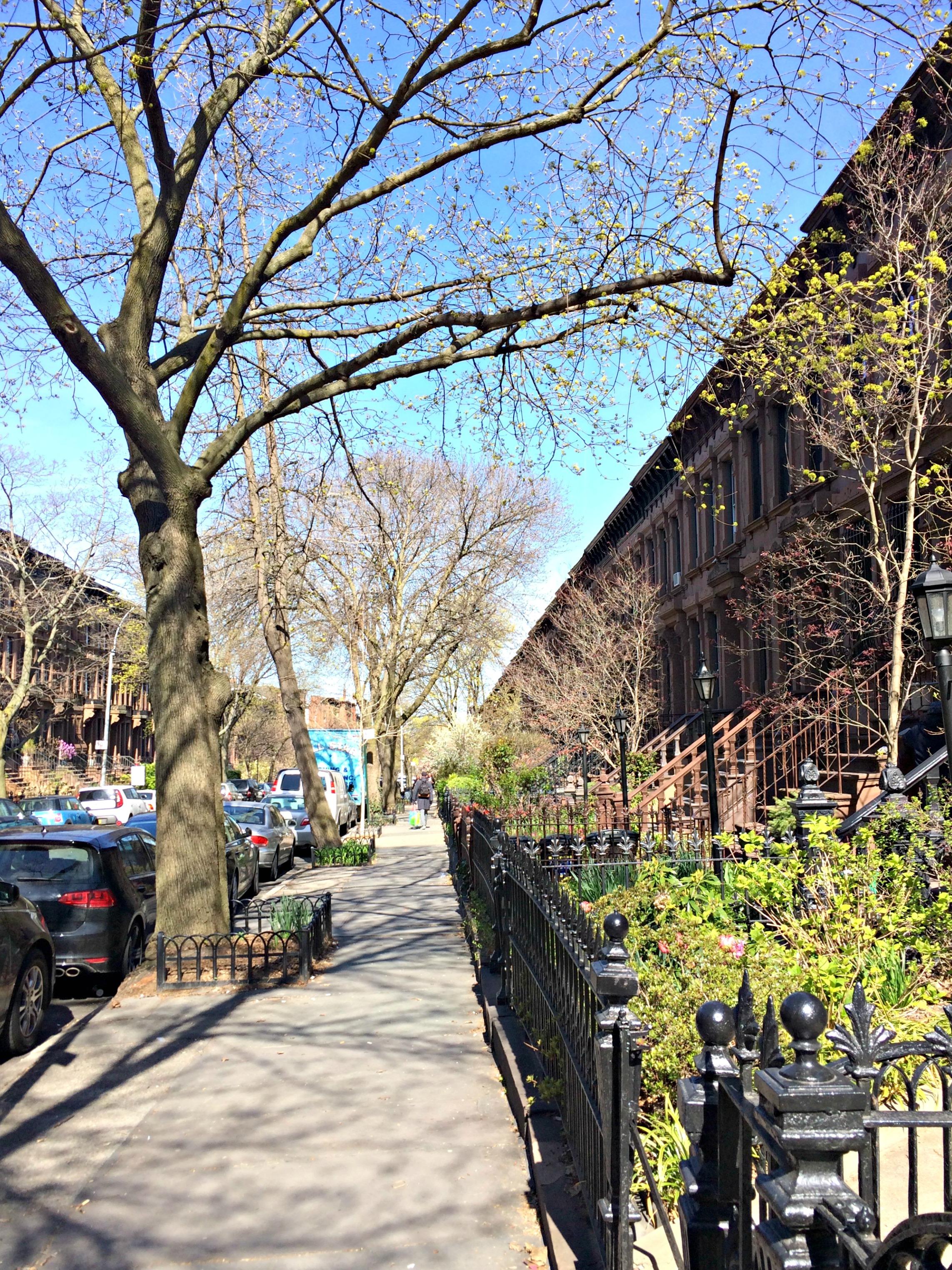 Park Slope Brownstones
