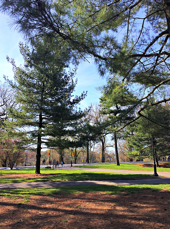 prospect park running path