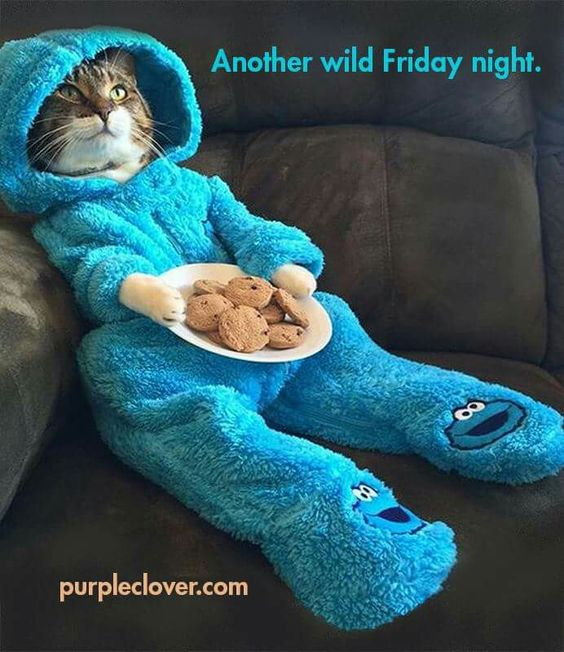 Friday funny cat