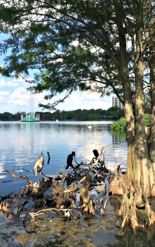 Lake Eola Park birds and trees
