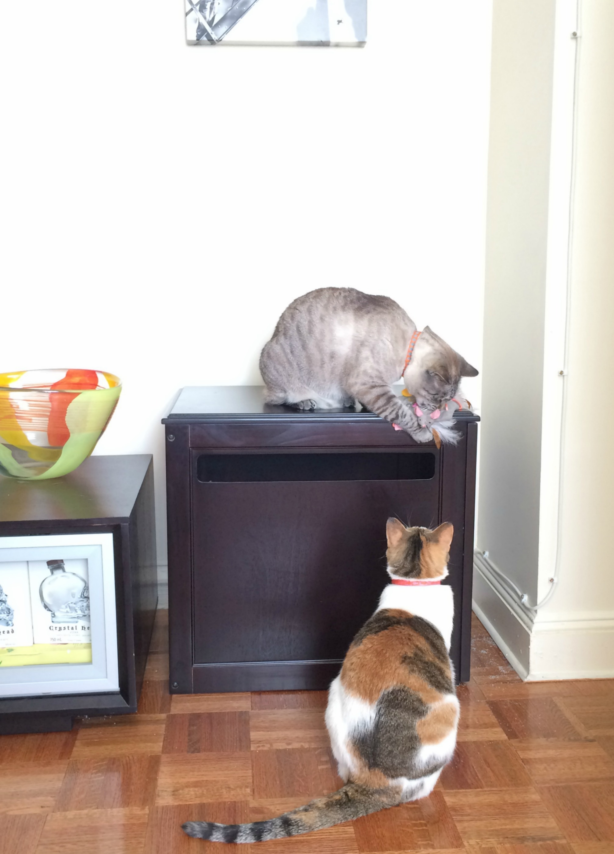 Aspen and Cali playing on litter box