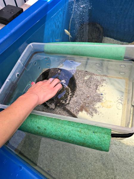 NY Aquarium Touch Tank