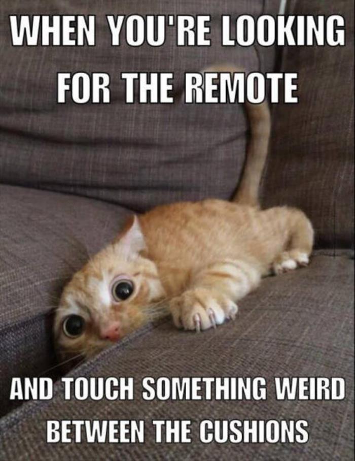 cat remote funny