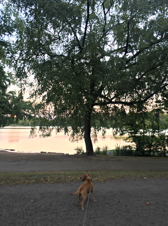 Roadie in Prospect Park
