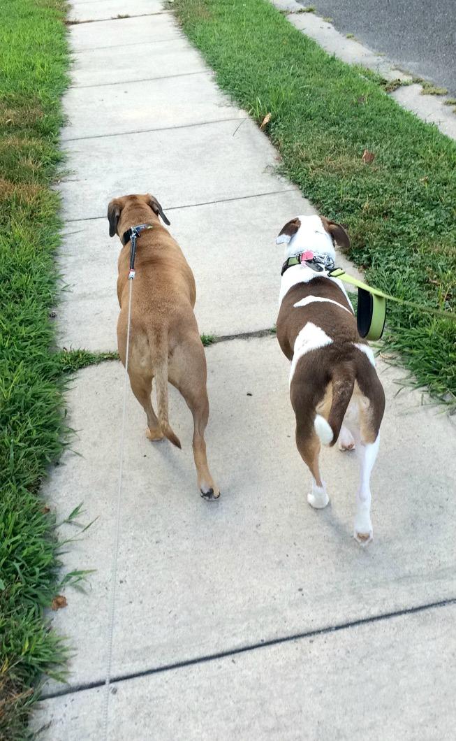 walking roadie and jordan