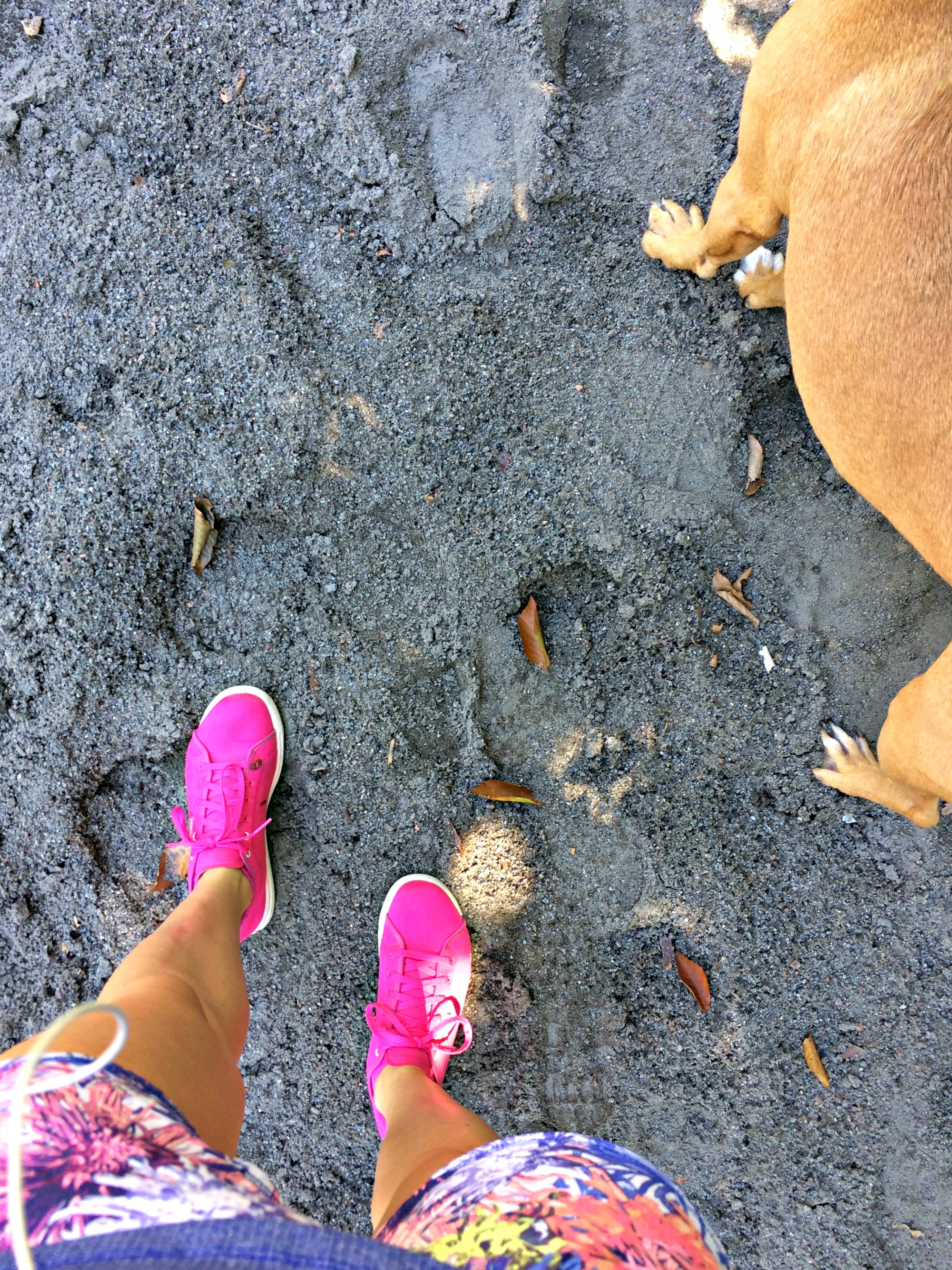 walking with roadie